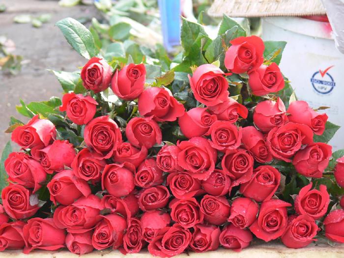 Красные розы в цветочном магазине
