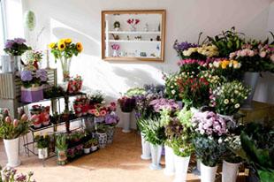 цветы с хорошим освещением