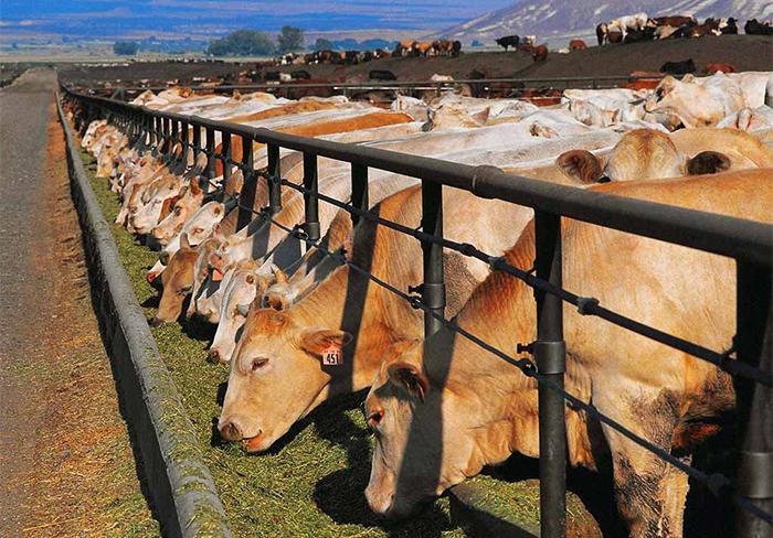 Бизнес в сфере животноводства