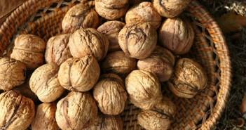Грецкий орех - выращивание на продажу