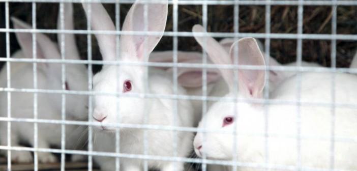 Кроличья ферма