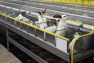 Племенное хозяйство по выращиванию кроликов