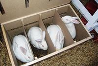 Разведение кроликов на продажу